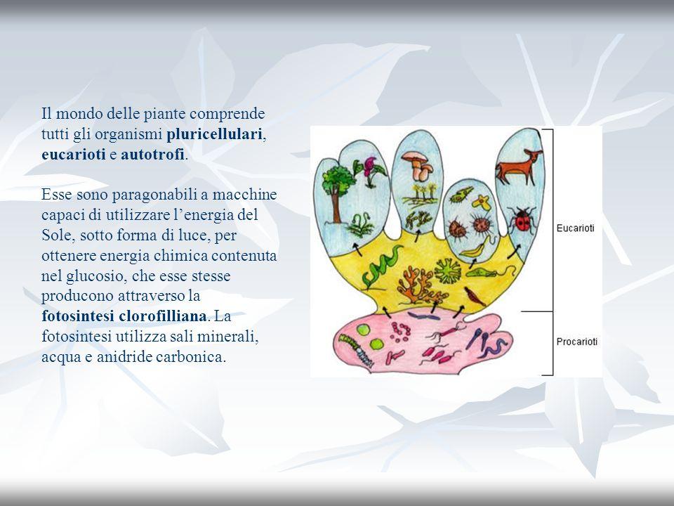 Il mondo delle piante comprende tutti gli organismi pluricellulari, eucarioti e autotrofi. Esse sono paragonabili a macchine capaci di utilizzare lene
