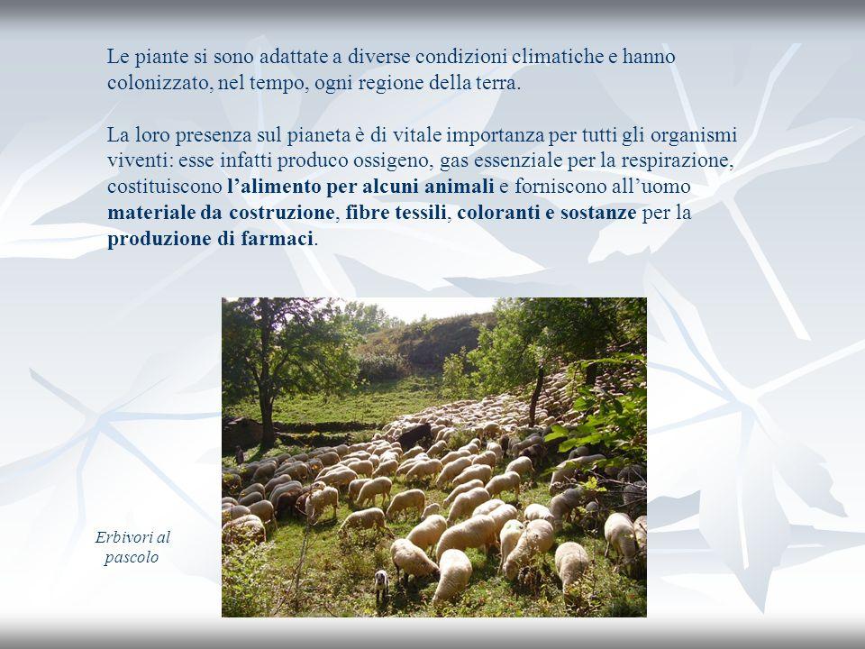 Questa presentazione è stata realizzata da Sara e Marika della classe terza media di Piancavallo