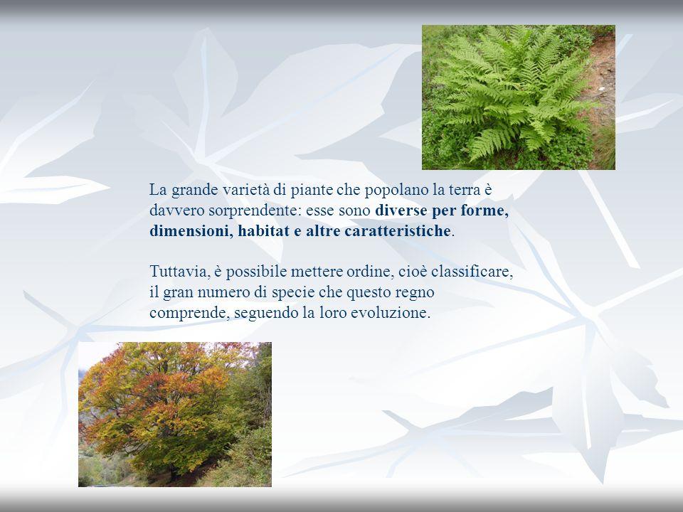 La grande varietà di piante che popolano la terra è davvero sorprendente: esse sono diverse per forme, dimensioni, habitat e altre caratteristiche. Tu