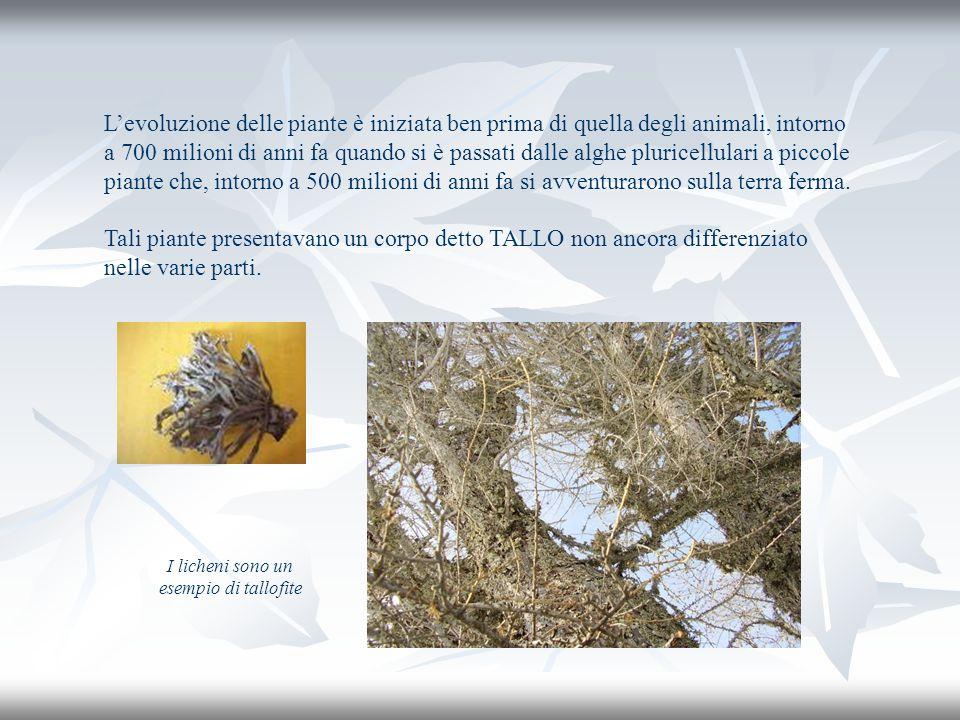 Levoluzione delle piante è iniziata ben prima di quella degli animali, intorno a 700 milioni di anni fa quando si è passati dalle alghe pluricellulari