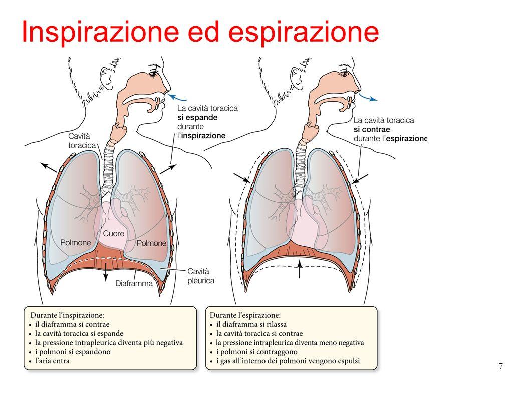 8 I polmoni producono due tipi di secrezioni che influenzano la ventilazione: il muco viscoso presente nelle vie aeree superiori intrappola particelle, detriti e microrganismi inalati con laria; il surfactante polmonare riduce la tensione superficiale nel fluido che riveste gli alveoli facilitando lingresso di aria.