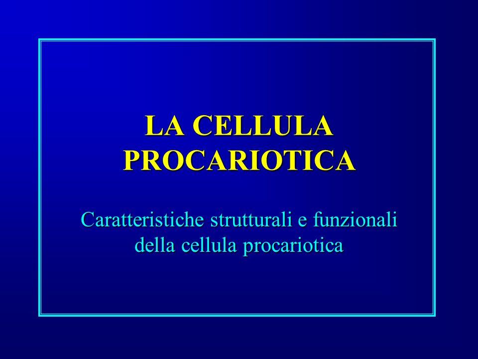 LA CELLULA PROCARIOTICA Caratteristiche strutturali e funzionali della cellula procariotica