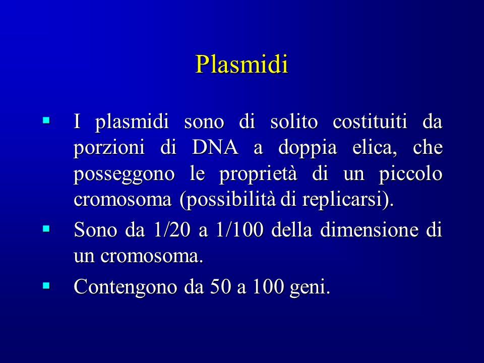 Plasmidi I plasmidi sono di solito costituiti da porzioni di DNA a doppia elica, che posseggono le proprietà di un piccolo cromosoma (possibilità di replicarsi).