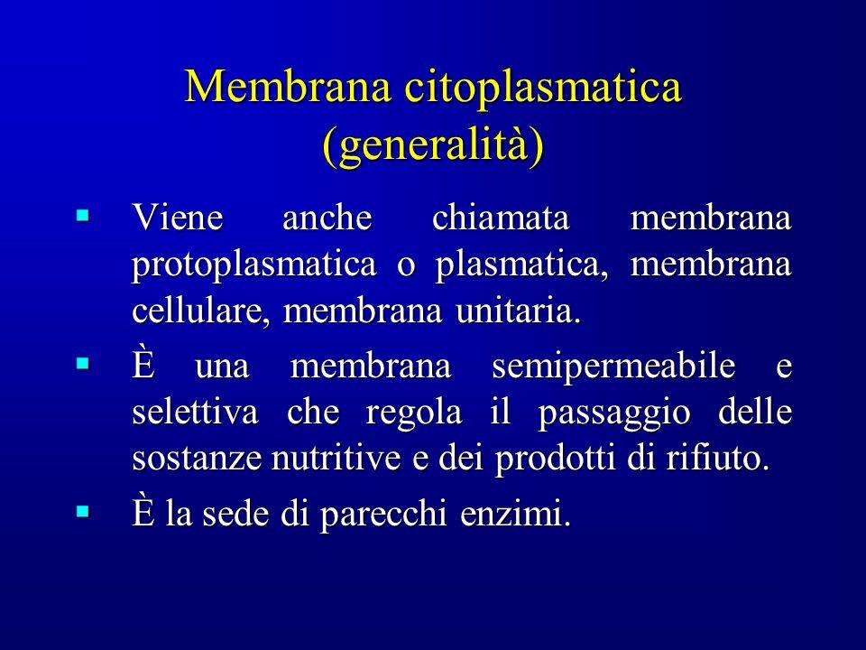 Membrana citoplasmatica (generalità) Viene anche chiamata membrana protoplasmatica o plasmatica, membrana cellulare, membrana unitaria. Viene anche ch
