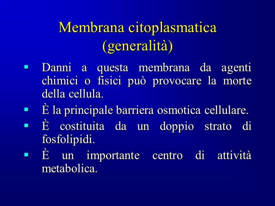 Membrana citoplasmatica (generalità) Danni a questa membrana da agenti chimici o fisici può provocare la morte della cellula.