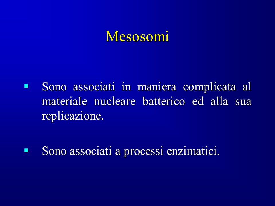 Mesosomi Sono associati in maniera complicata al materiale nucleare batterico ed alla sua replicazione.