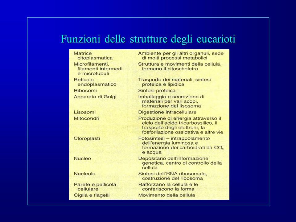 Funzioni delle strutture degli eucarioti