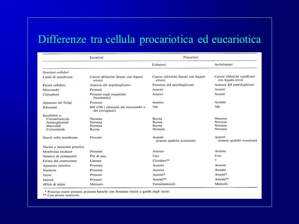 Mesosomi Intervengono nella cellula batterica in vari processi riproduttivi e metabolici.