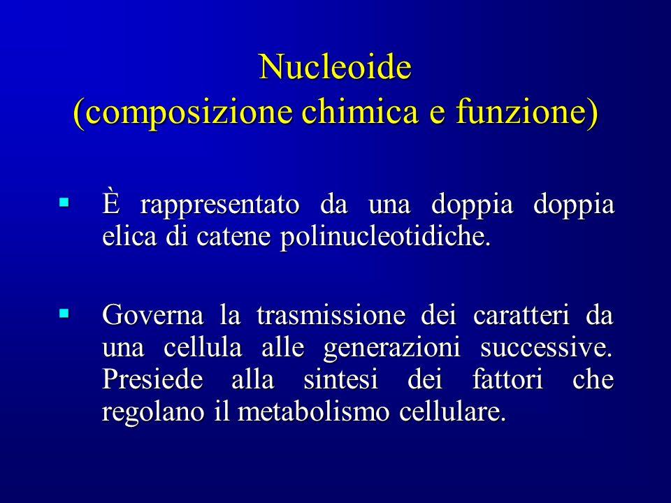 Nucleoide (generalità) Tutti i batteri posseggono una regione, relativamente trasparente, in cui è addensato il materiale cromosomale, denominato nucleoide (cromosoma batterico o corpo cromatico).