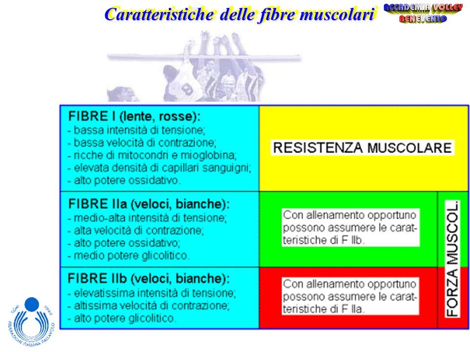 Caratteristiche delle fibre muscolari Fibre lenteFibre rapide ossidative glicolitiche Sorgente primaria di ATP Fosforilazione ossidativa Glicolisi ana