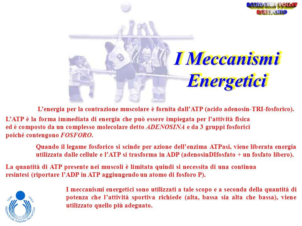 I Meccanismi Energetici Il muscolo e la sua contrazione Le fasi calde dellapprendimento Metodi e Stili di INSEGNAMENTO