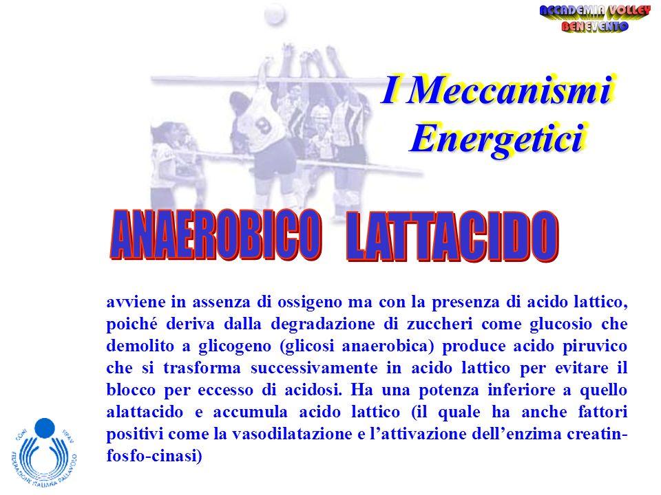 I Meccanismi Energetici avviene in assenza di ossigeno e di acido lattico ed è strettamente legato alla scissione della fofsocreatina (PC) causata dal