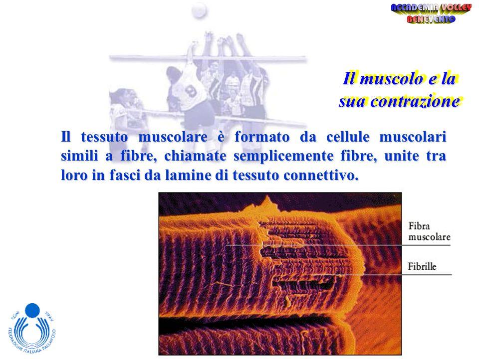 Le Fonti Energetiche Aerobico Anaerobico Lattacido Anaerobico Alattacido Pot. Minima Quasi Max Max Dur. Illimitata 40 – 2 10 – 20 F.C. 120 - 150 > 160