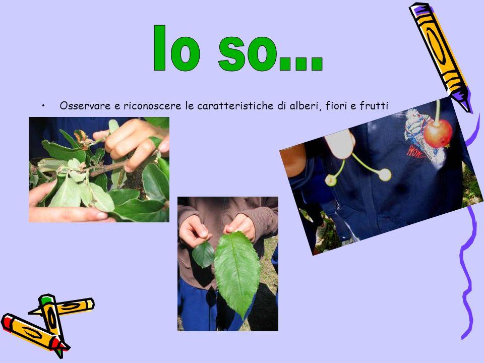 Osservare e riconoscere le caratteristiche di alberi, fiori e frutti