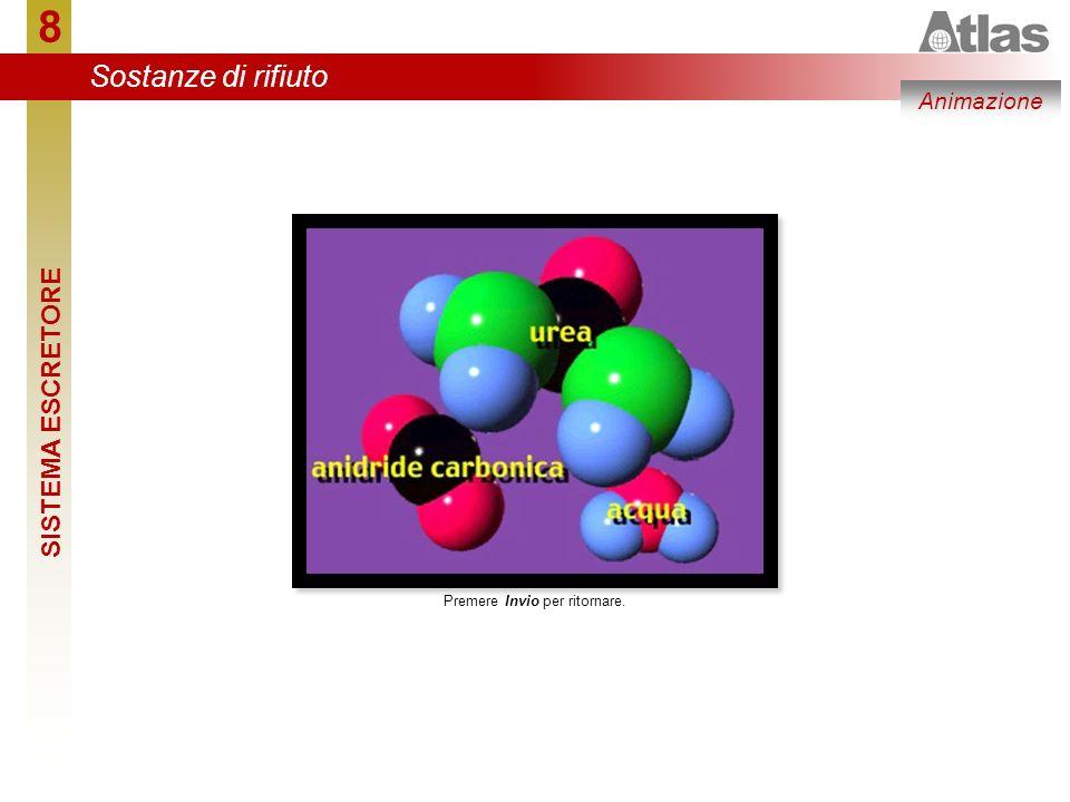 8 2 Il nefrone è costituito da due porzioni: la prima trasferisce nel tubulo quasi tutto quello che si trova nel plasma sanguigno, la seconda recupera dal tubulo le sostanze utili al sangue (e all organismo).