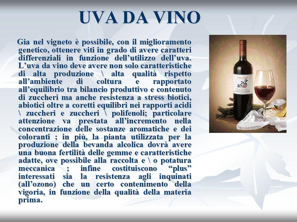 UVA DA VINO Gia nel vigneto è possibile, con il miglioramento genetico, ottenere viti in grado di avere caratteri differenziali in funzione dellutiliz