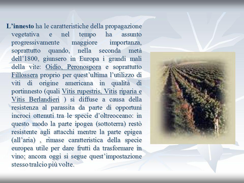 Linnesto ha le caratteristiche della propagazione vegetativa e nel tempo ha assunto progressivamente maggiore importanza, soprattutto quando, nella se