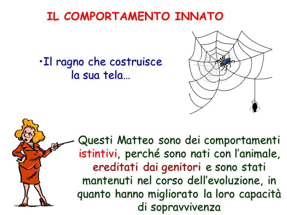 Il ragno che costruisce la sua tela… Questi Matteo sono dei comportamenti istintivi, perché sono nati con lanimale, ereditati dai genitori e sono stat