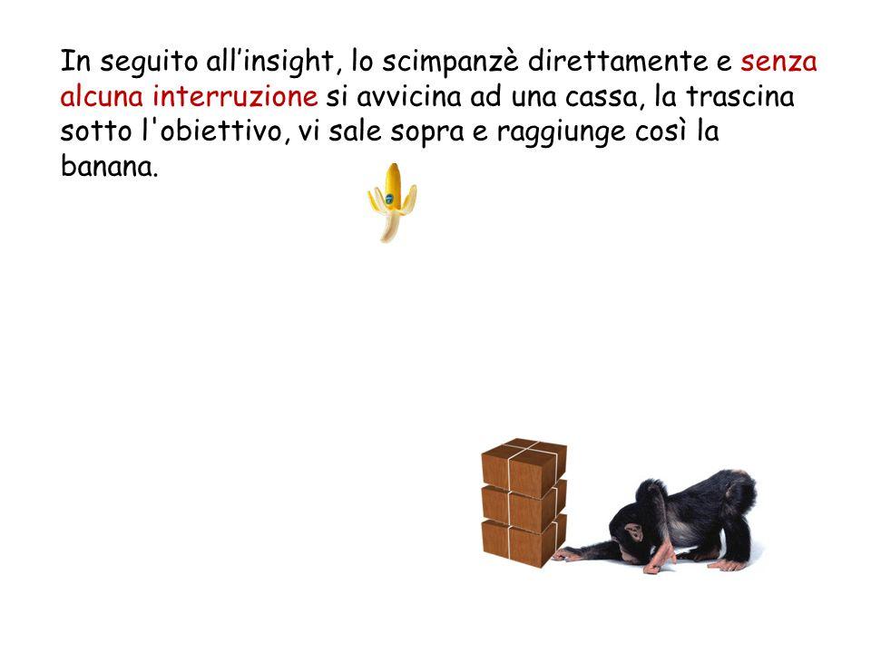 In seguito all insight, lo scimpanzè direttamente e senza alcuna interruzione si avvicina ad una cassa, la trascina sotto l'obiettivo, vi sale sopra e