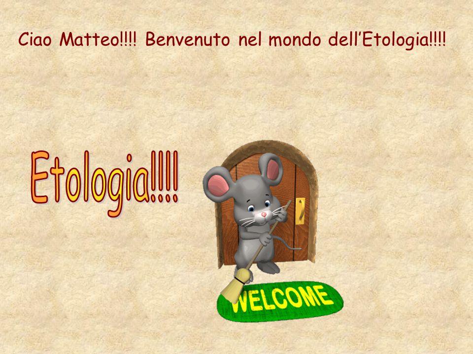 Ciao Matteo!!!! Benvenuto nel mondo dellEtologia!!!!