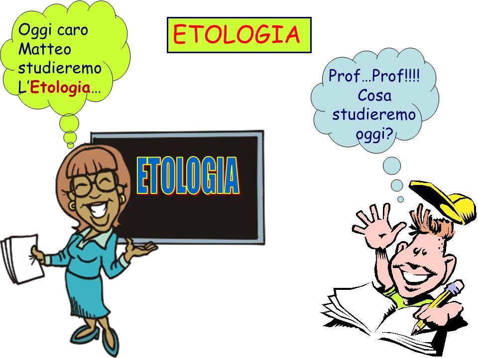 ETOLOGIA Prof…Prof!!!! Cosa studieremo oggi? Oggi caro Matteo studieremo LEtologia…