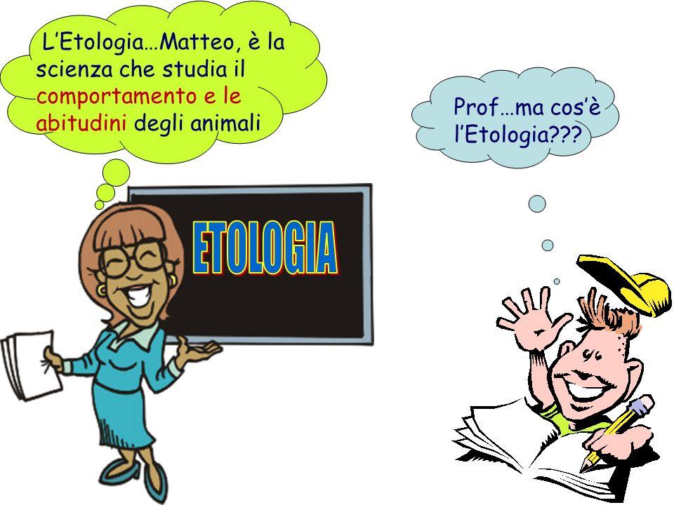 Prof…ma cosè lEtologia??? LEtologia…Matteo, è la scienza che studia il comportamento e le abitudini degli animali