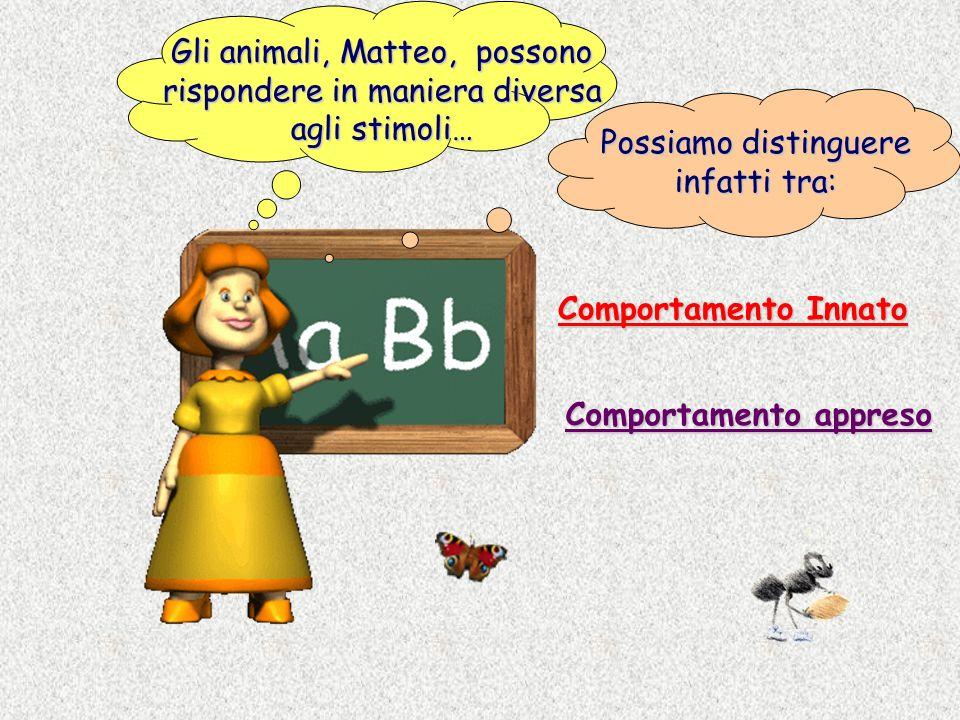 Gli animali, Matteo, possono rispondere in maniera diversa agli stimoli… Possiamo distinguere infatti tra: Comportamento Innato Comportamento appreso