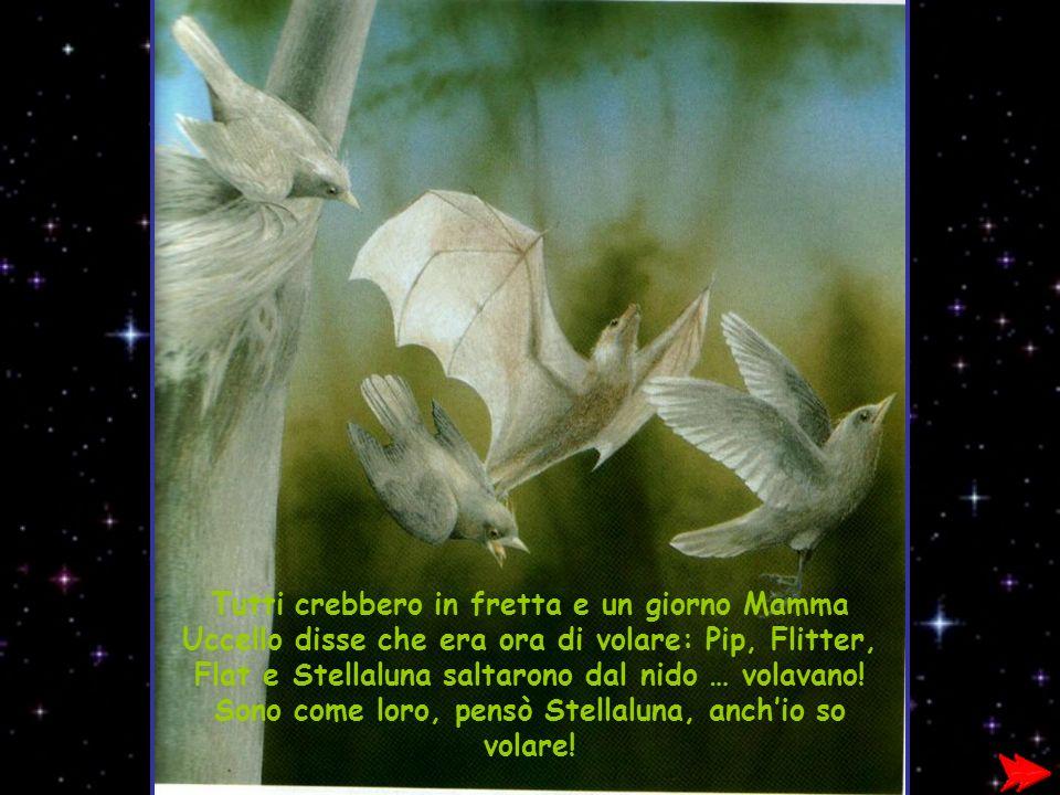 Tutti crebbero in fretta e un giorno Mamma Uccello disse che era ora di volare: Pip, Flitter, Flat e Stellaluna saltarono dal nido … volavano! Sono co