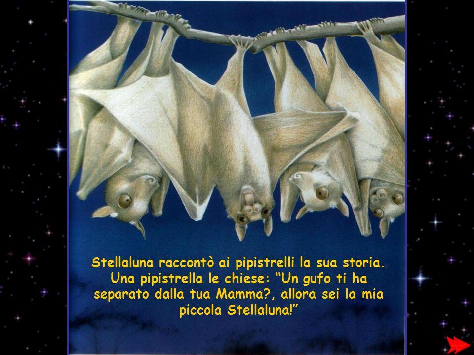 Stellaluna raccontò ai pipistrelli la sua storia. Una pipistrella le chiese: Un gufo ti ha separato dalla tua Mamma?, allora sei la mia piccola Stella