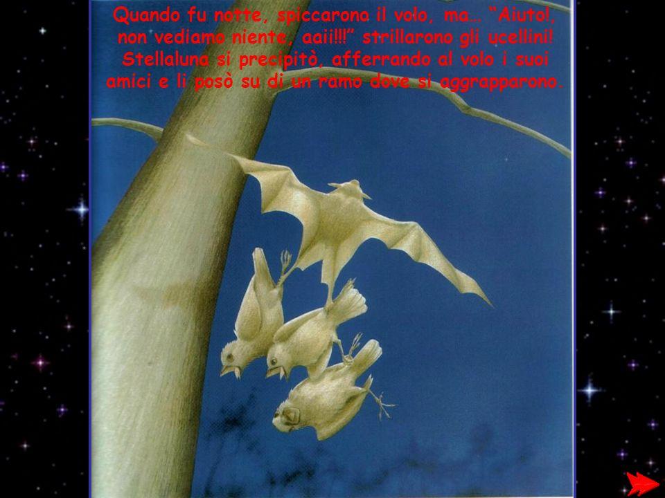 Quando fu notte, spiccarono il volo, ma… Aiuto!, non vediamo niente, aaii!!! strillarono gli ucellini! Stellaluna si precipitò, afferrando al volo i s