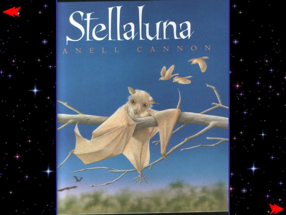 Stellaluna li abbracciò da un ramo sopra di loro.Vorrei che anche voi ci vedeste al buio.