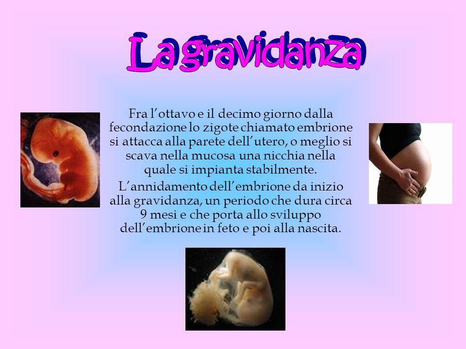 Fra lottavo e il decimo giorno dalla fecondazione lo zigote chiamato embrione si attacca alla parete dellutero, o meglio si scava nella mucosa una nic
