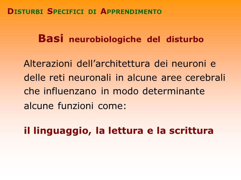 Basi neurobiologiche del disturbo Alterazioni dellarchitettura dei neuroni e delle reti neuronali in alcune aree cerebrali che influenzano in modo det