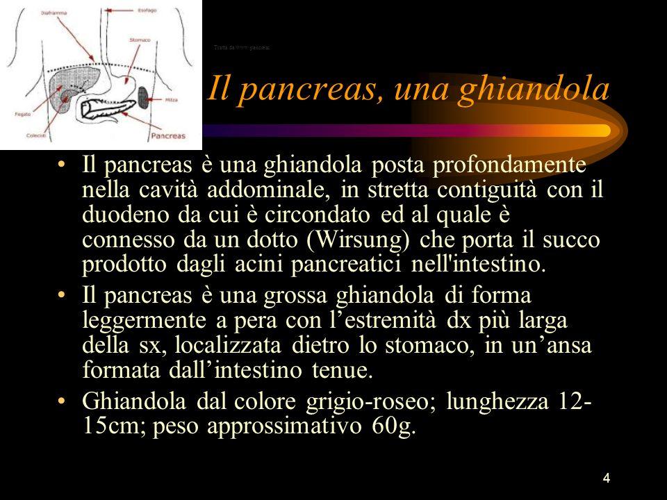 4 Il pancreas, una ghiandola Il pancreas è una ghiandola posta profondamente nella cavità addominale, in stretta contiguità con il duodeno da cui è ci