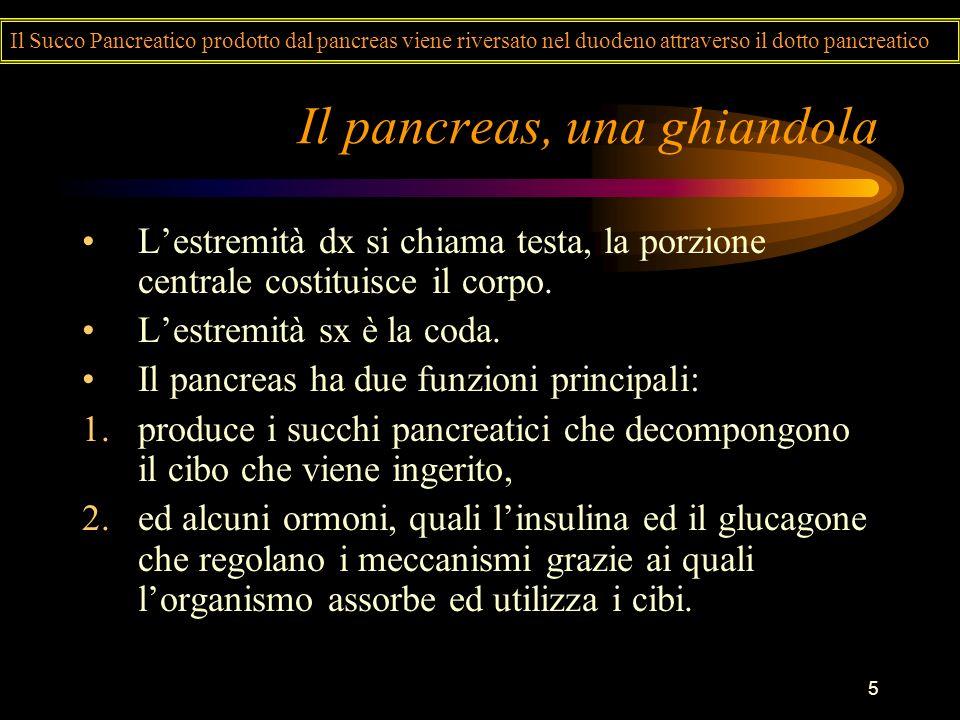 5 Il pancreas, una ghiandola Lestremità dx si chiama testa, la porzione centrale costituisce il corpo. Lestremità sx è la coda. Il pancreas ha due fun