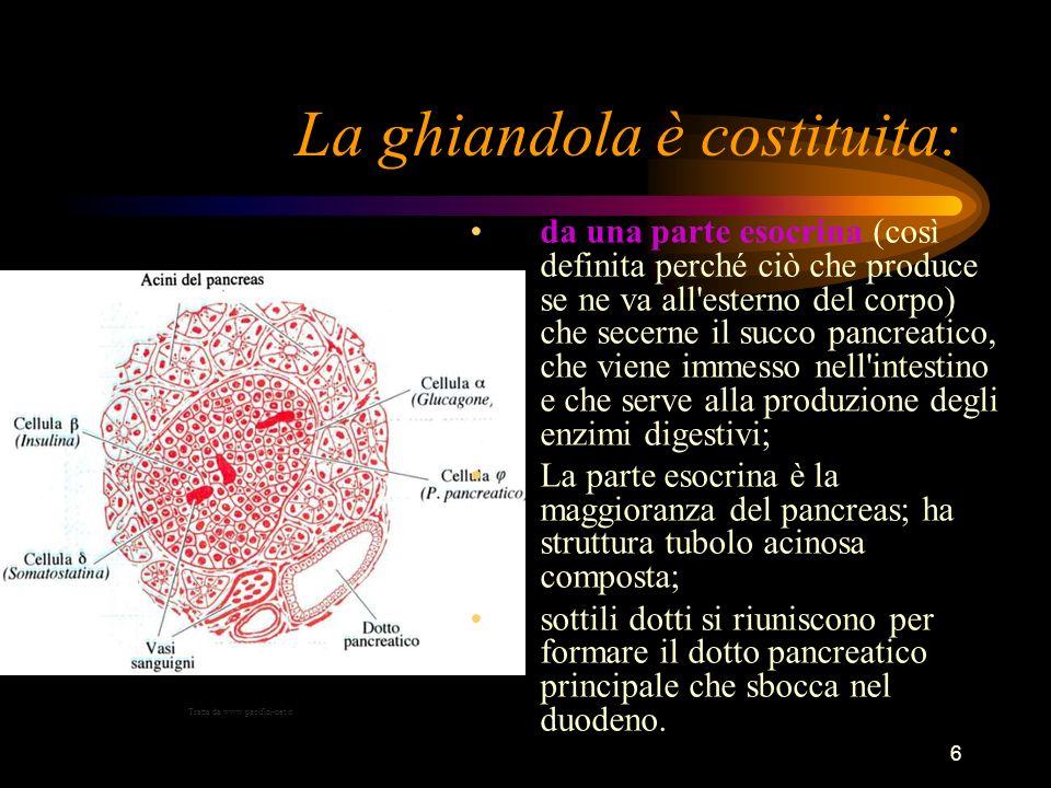 6 La ghiandola è costituita: da una parte esocrina (così definita perché ciò che produce se ne va all'esterno del corpo) che secerne il succo pancreat