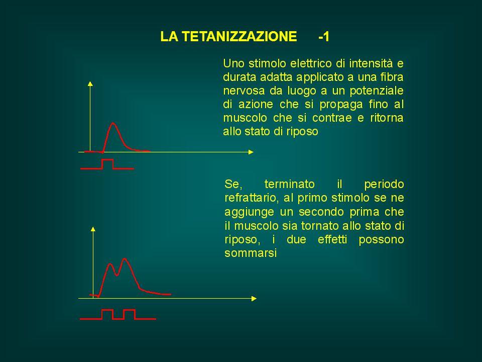 LA TETANIZZAZIONE -1