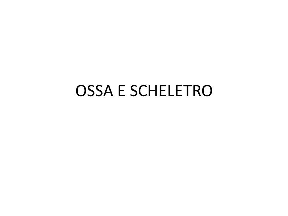 OSSA E SCHELETRO