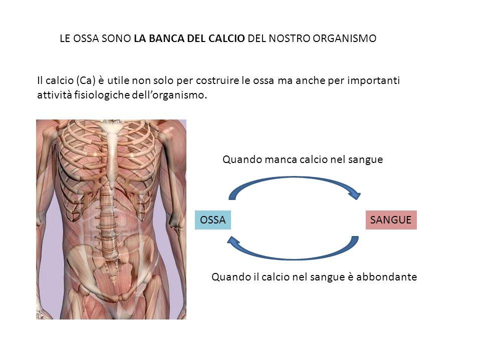 LE OSSA SONO LA BANCA DEL CALCIO DEL NOSTRO ORGANISMO Il calcio (Ca) è utile non solo per costruire le ossa ma anche per importanti attività fisiologi