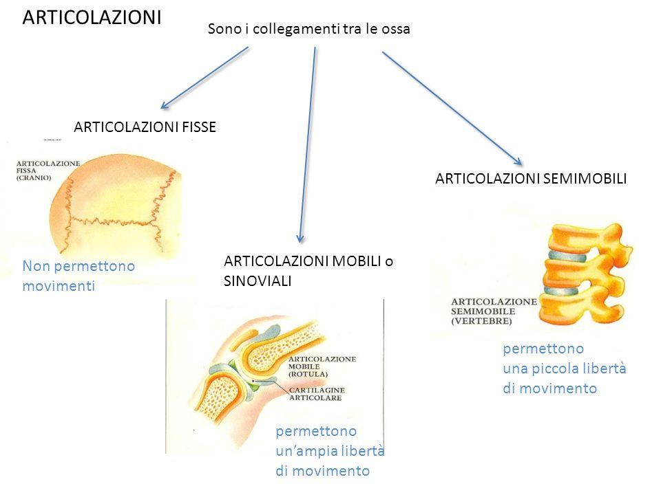 ARTICOLAZIONI Sono i collegamenti tra le ossa ARTICOLAZIONI FISSE ARTICOLAZIONI MOBILI o SINOVIALI ARTICOLAZIONI SEMIMOBILI Non permettono movimenti p