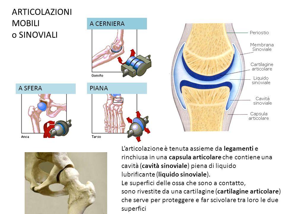 A CERNIERA A SFERAPIANA Larticolazione è tenuta assieme da legamenti e rinchiusa in una capsula articolare che contiene una cavità (cavità sinoviale)