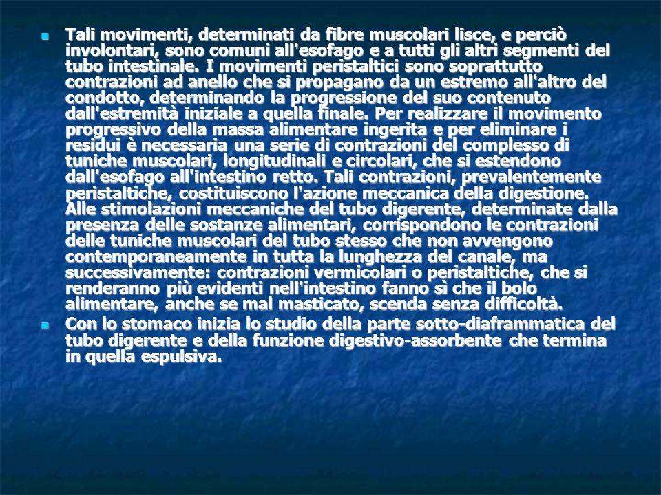 Tali movimenti, determinati da fibre muscolari lisce, e perciò involontari, sono comuni all'esofago e a tutti gli altri segmenti del tubo intestinale.