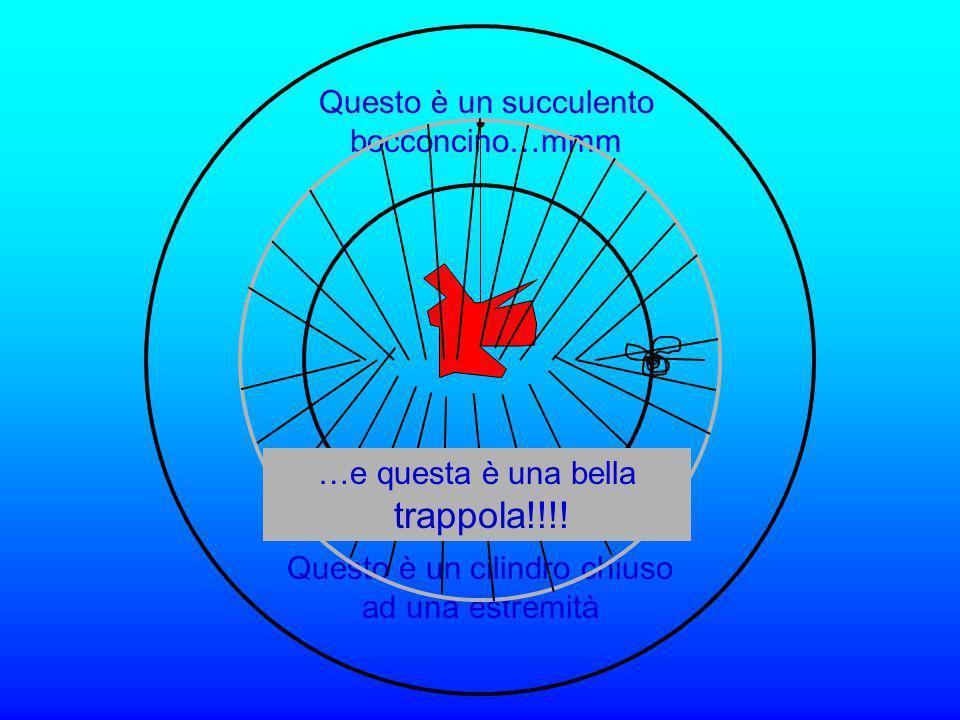 Vi presento Orazio che nuota libero nellampio spazio… Ciao.