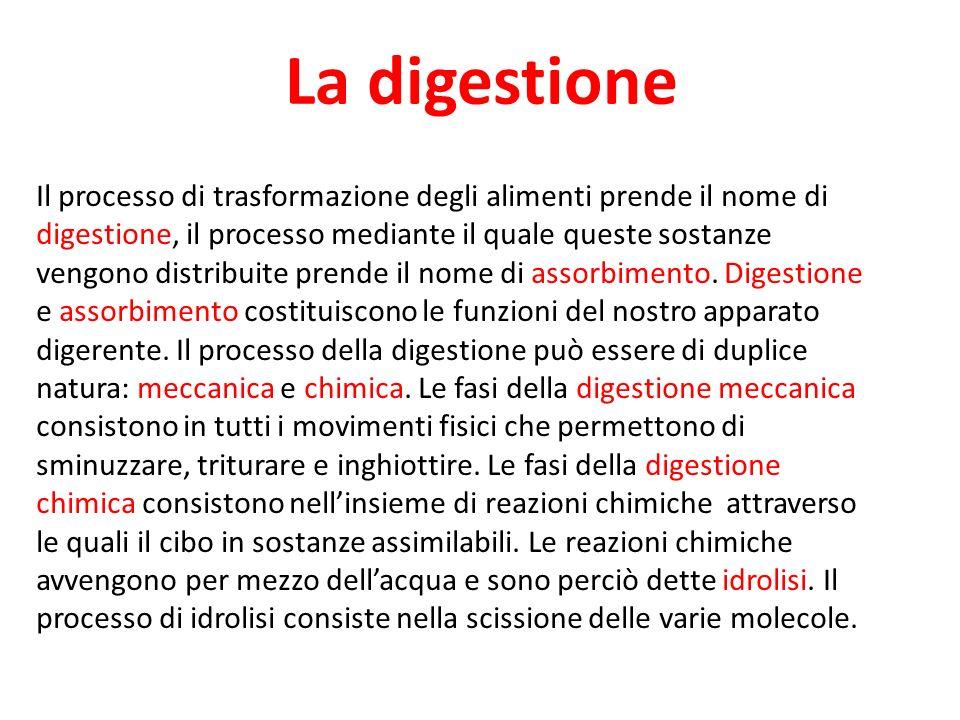 La digestione Il processo di trasformazione degli alimenti prende il nome di digestione, il processo mediante il quale queste sostanze vengono distrib