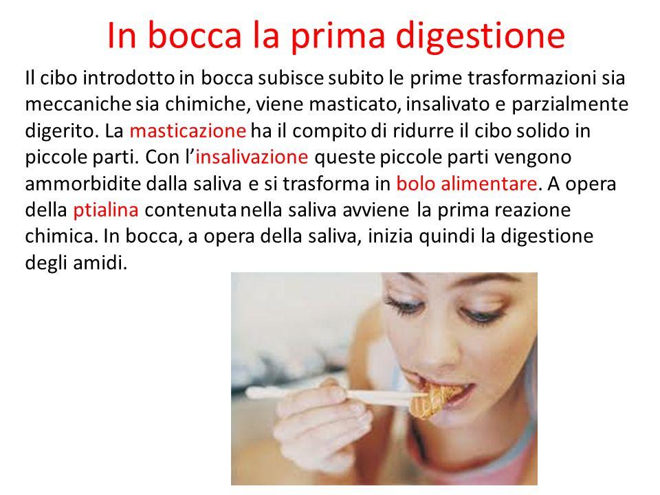 In bocca la prima digestione Il cibo introdotto in bocca subisce subito le prime trasformazioni sia meccaniche sia chimiche, viene masticato, insaliva