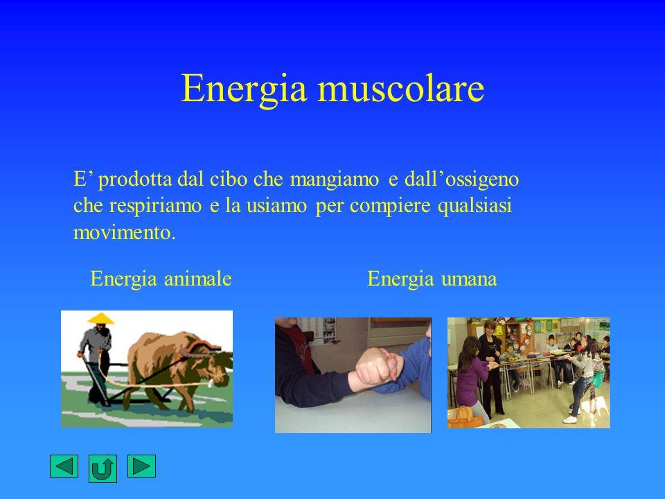 Energia muscolare E prodotta dal cibo che mangiamo e dallossigeno che respiriamo e la usiamo per compiere qualsiasi movimento. Energia animaleEnergia