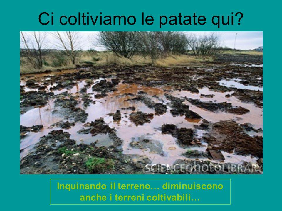 Ci coltiviamo le patate qui? Inquinando il terreno… diminuiscono anche i terreni coltivabili…