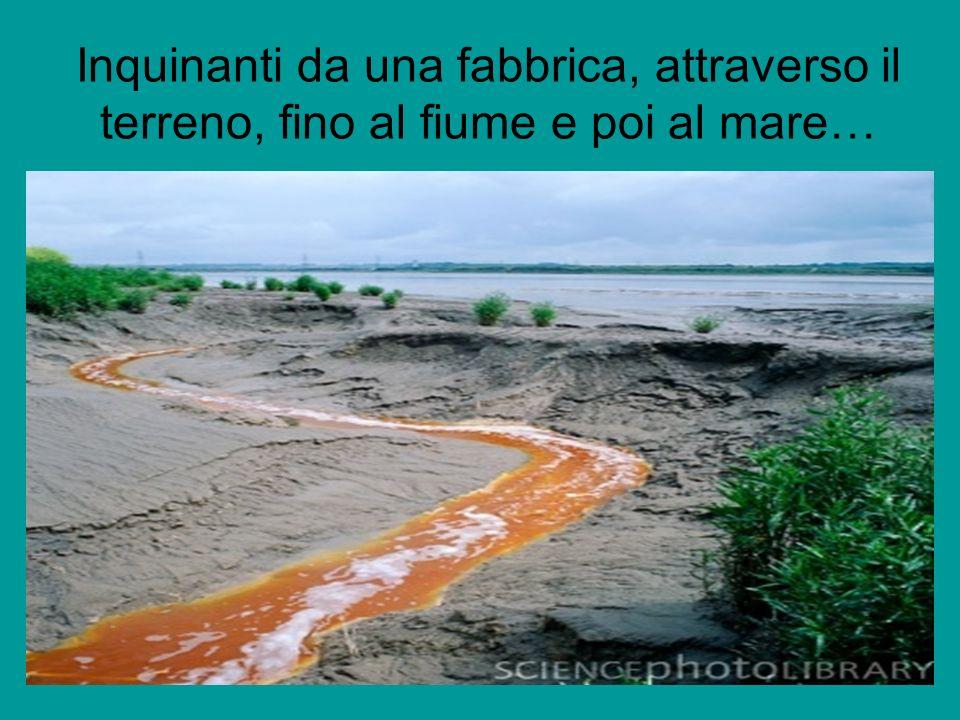 Inquinanti da una fabbrica, attraverso il terreno, fino al fiume e poi al mare…