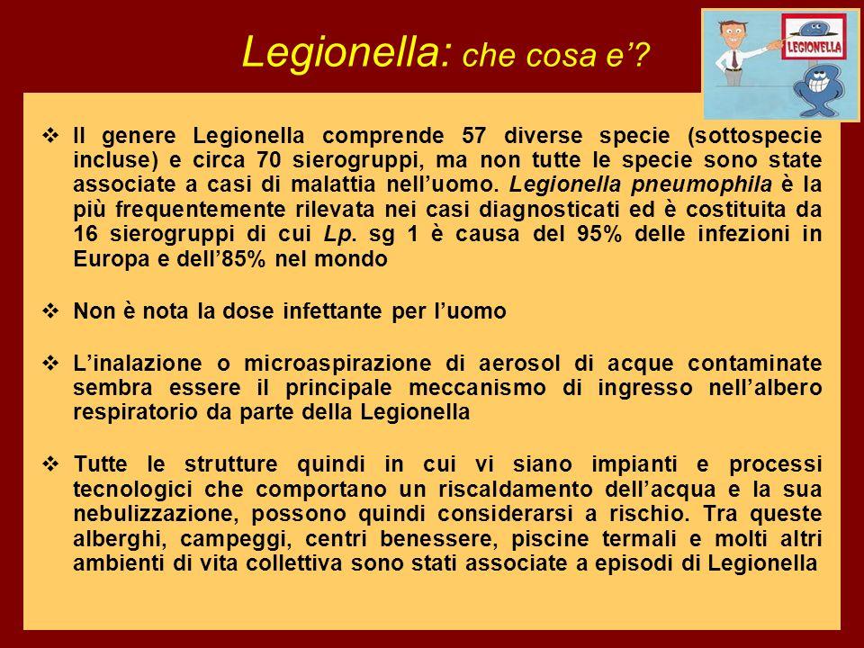 Il genere Legionella comprende 57 diverse specie (sottospecie incluse) e circa 70 sierogruppi, ma non tutte le specie sono state associate a casi di m