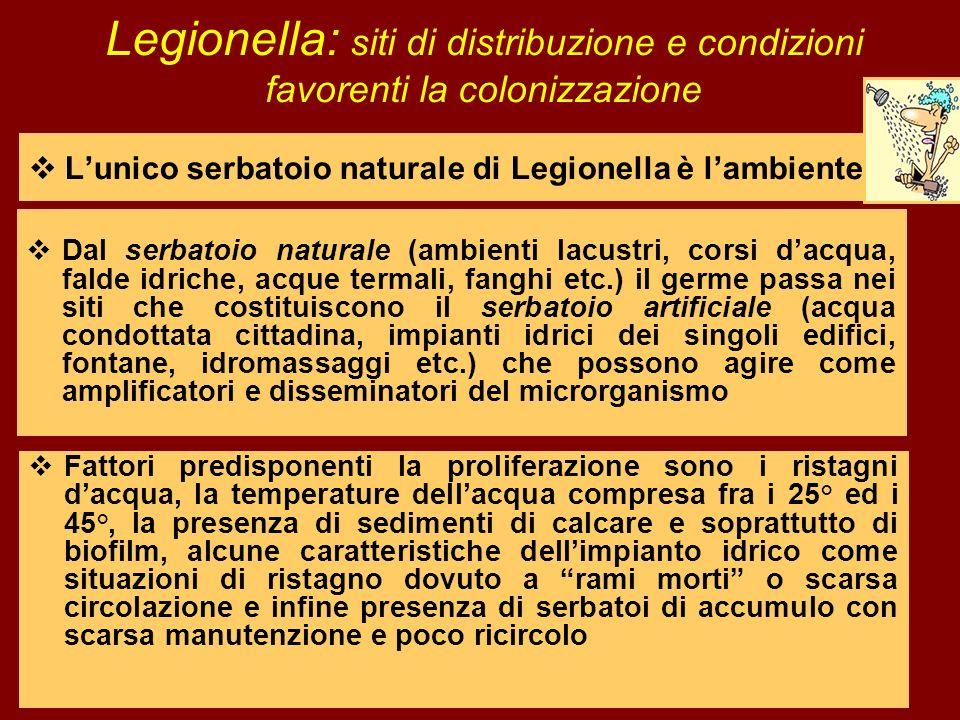 Lunico serbatoio naturale di Legionella è lambiente Legionella: siti di distribuzione e condizioni favorenti la colonizzazione Dal serbatoio naturale